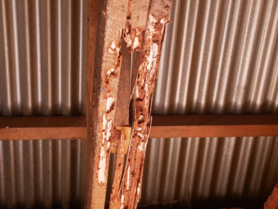 Lecker, dachten sich die Termiten und fraßen einfach mal das Holz